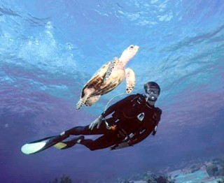 Photo of scuba diver with turtle goes here.
