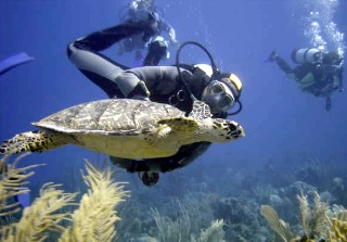 Photo of scuba diver swimming with turtle underwater goes here.