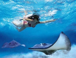 Photo of snorkeling with rays in Grand Cayman goes here.