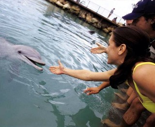 Photo of dolphin experience on Royal Caribbean goes here.