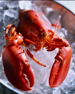 Photo of lobster goes here.