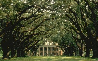 Photo of Oak Alley Plantation goes here.*